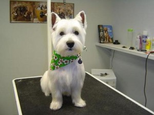 Dog Groomers - Chaz - After