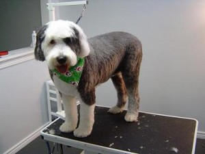 Paw Tyme Dog Grooming & Spa - Kuma - After