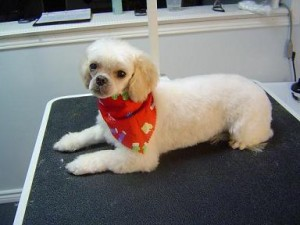 Paw Tyme Dog Grooming & Spa - LuLu - After
